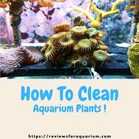 How-to-clean-aquarium-plants