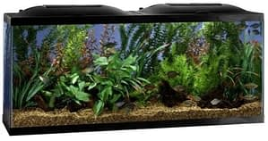 Marineland AMLPFK20B Biowheel Aquarium Kit best 20 gallon fish tank
