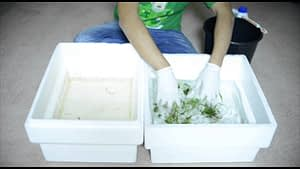 live plants-cleaning