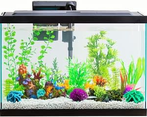 Tetra best 20 Gallon Fish Tank