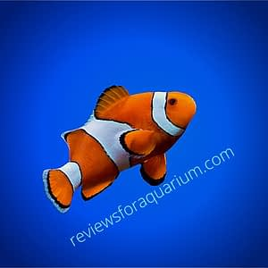 reviewsforaquarium logo,about image
